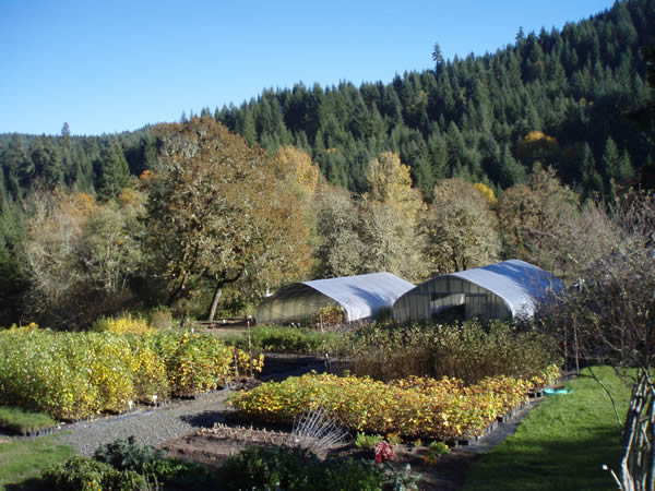 Doak Creek Native Plant Nursery, Eugene Oregon